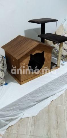 Animo - Arbre à chat
