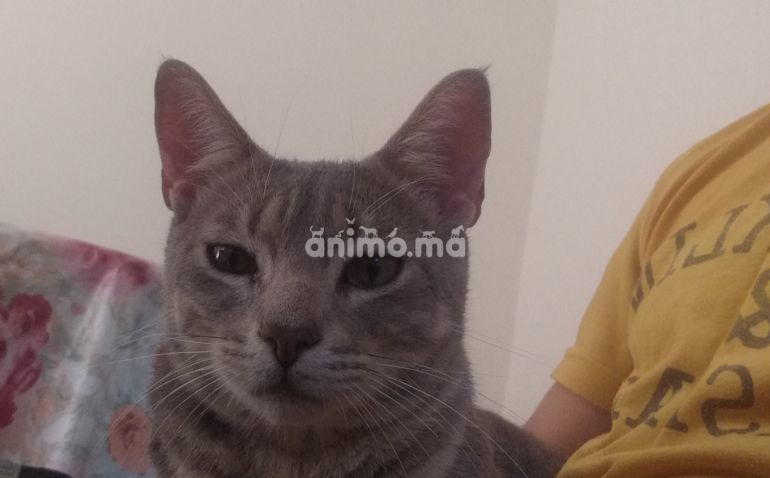 Animo - Chat a adopter