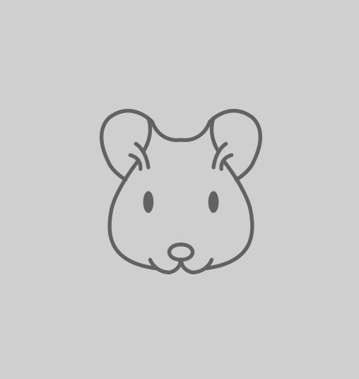 Animo - lapereaux angora
