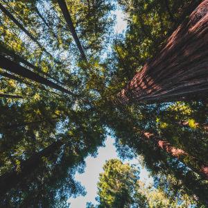 explore california redwoods rv rental