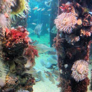 explore monterey bay aquarium california central coast