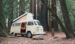 Cream Puff - VW Westfalia