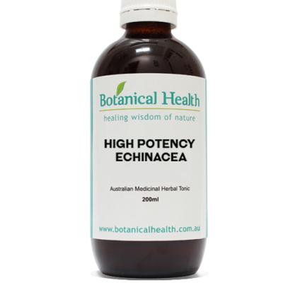 High Potency Echinacea