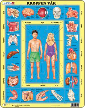 Puslespill, kroppen vår