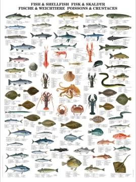 Naturplansje 70x100 cm, Fisk og skalldyr