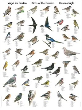 Naturplansje 70x100 cm, Fugler i hagen