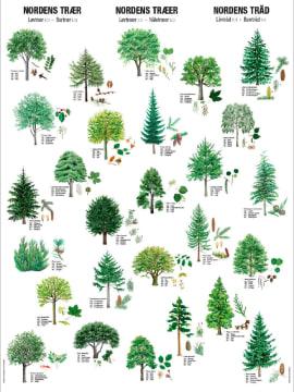 Naturplansje 70x100 cm, Nordens trær