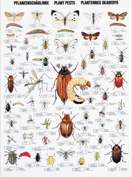 Naturplansje 70x100 cm, Insekter og skadedyr