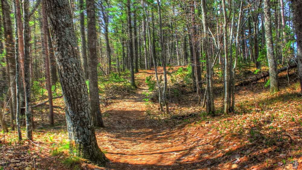 Forest trail at McLain State Park