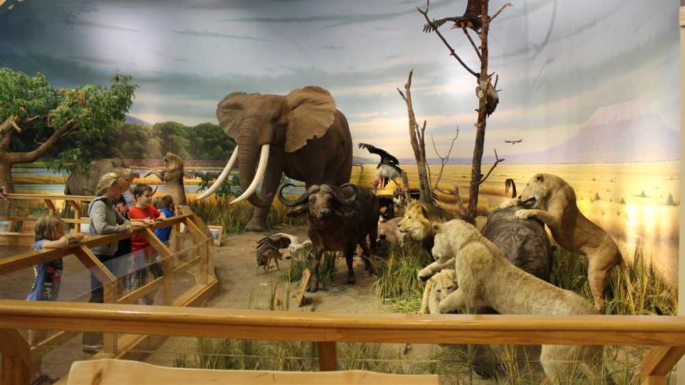 Cabela's Outers Superstore   Michigan on
