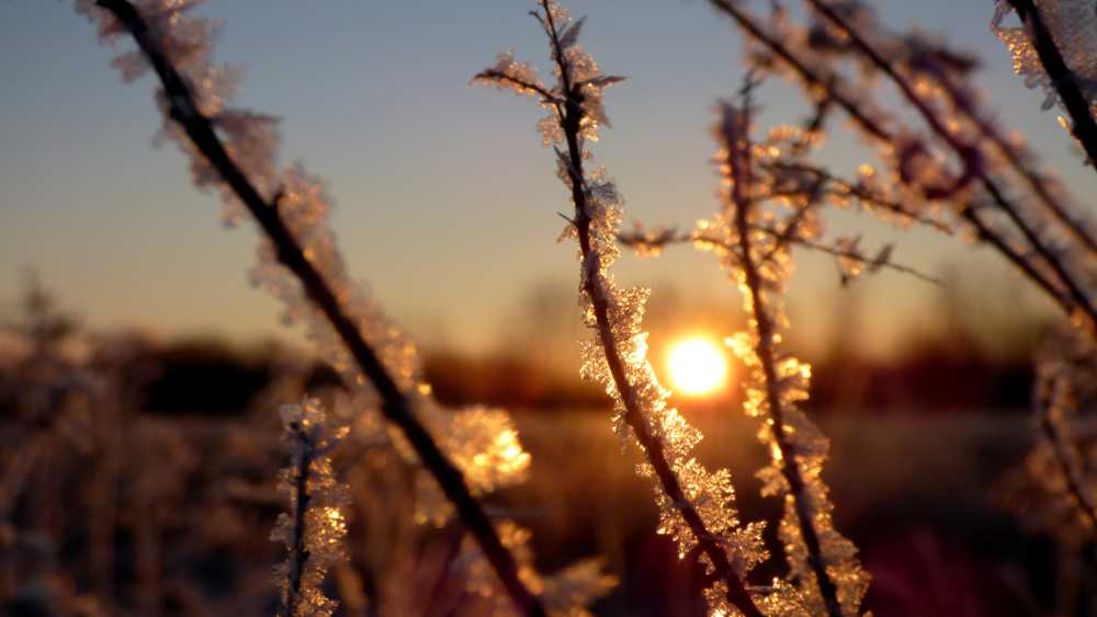 Frost at Sunrise (3).JPG