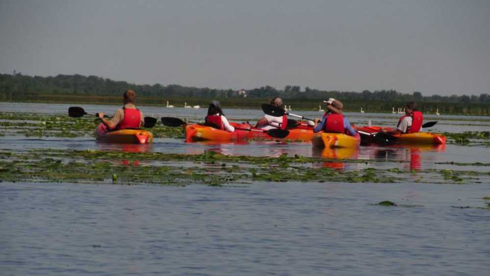 A group of five kayakers in Saginaw Bay.