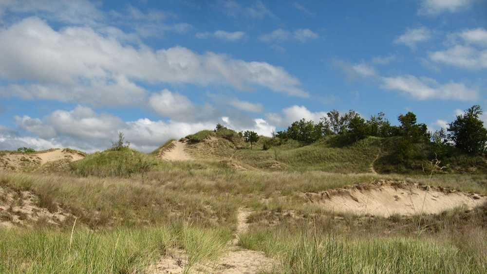 Grand Mere State Park grass  covered dunes