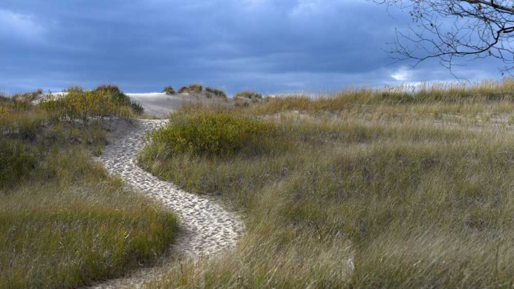 Sand pathway through the grass covered dunes