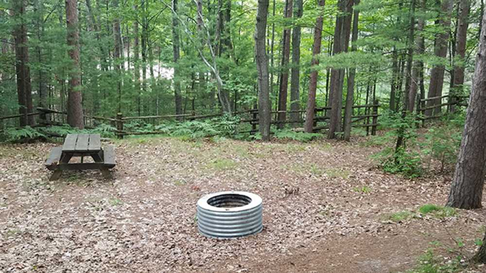 Picnic table and fire ring on a campsite surrounded by trees