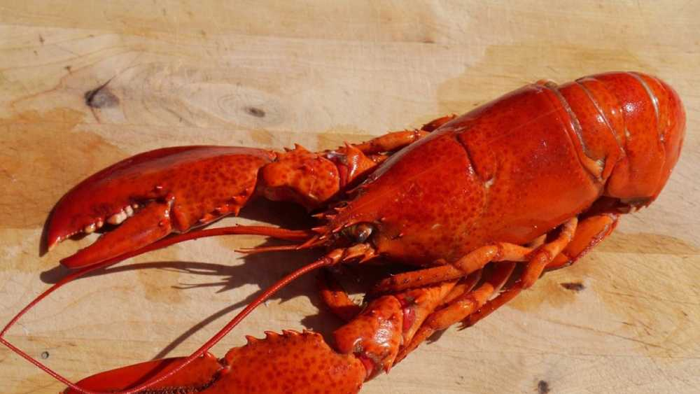 DNR, PRD, Leelanau SP, Lobster Fest