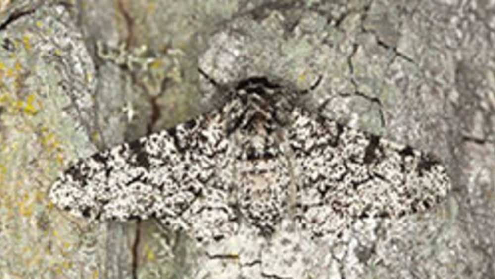 moth on tree