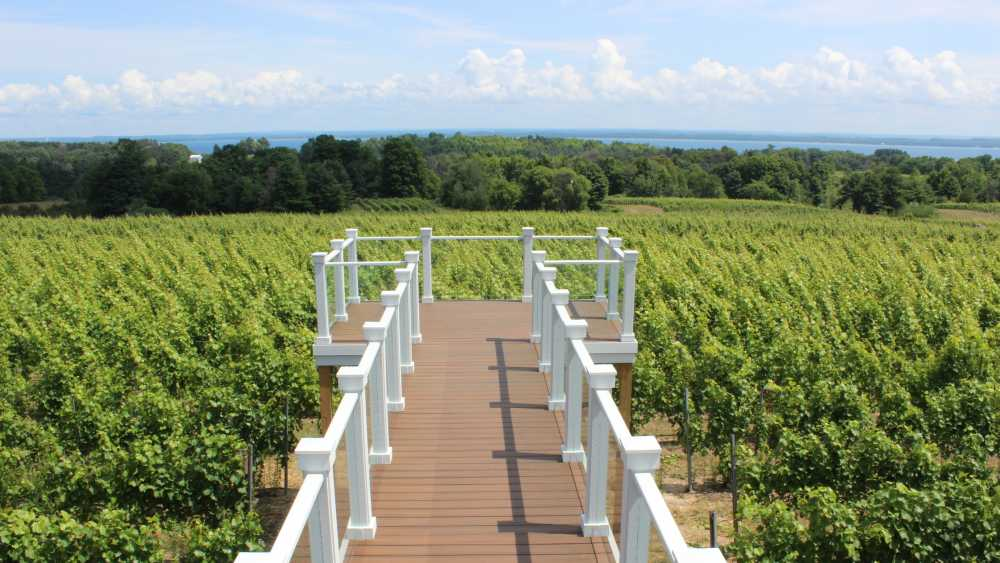 Bridge Above the Vines