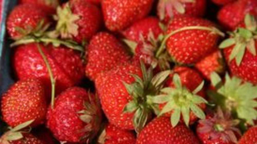 Huhn Strawberry Farm Michigan