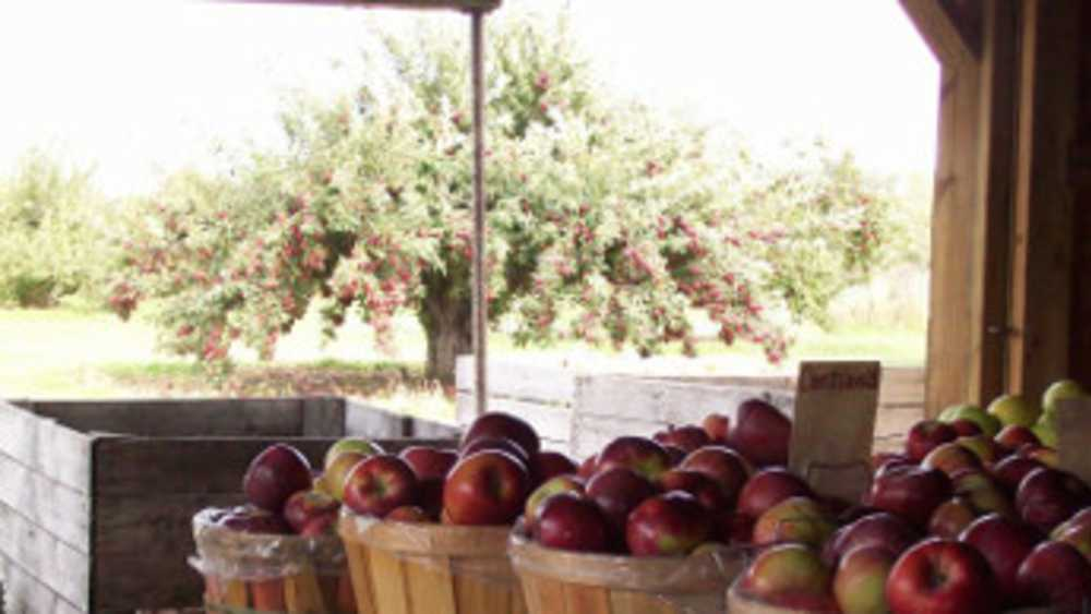 Wyrick's Orchard - Photo 1