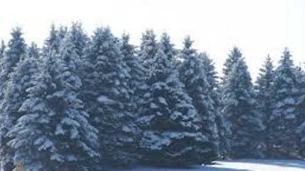Pinecrest Christmas Tree Farm | Michigan