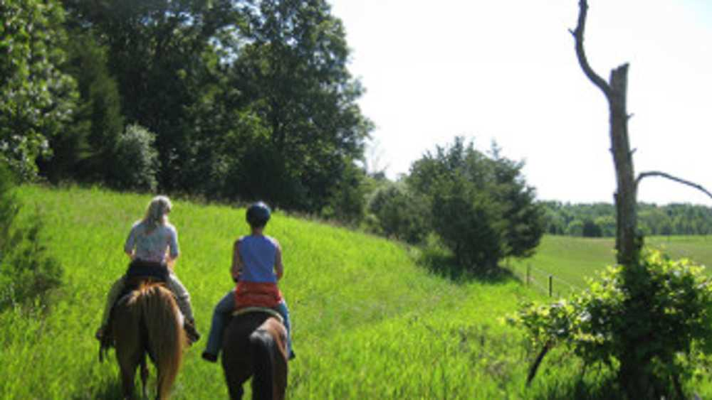 Horse riders follow a path through tall grass.