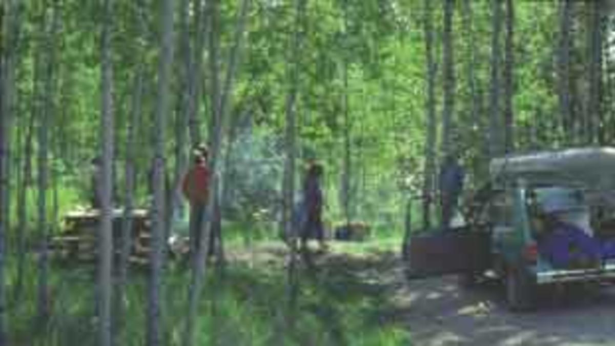 Big Knob State Forest Campground Amp Marsh Lake Pathway