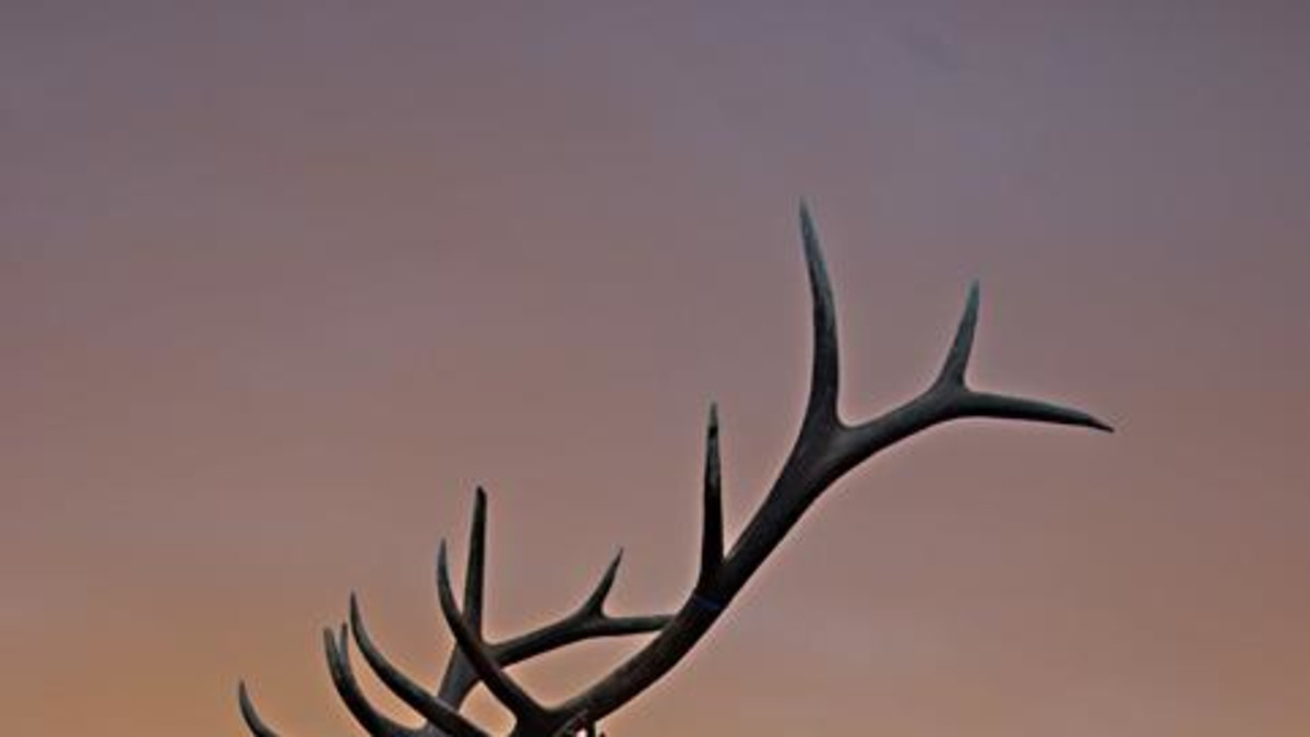 Antler Workshop & Gallery