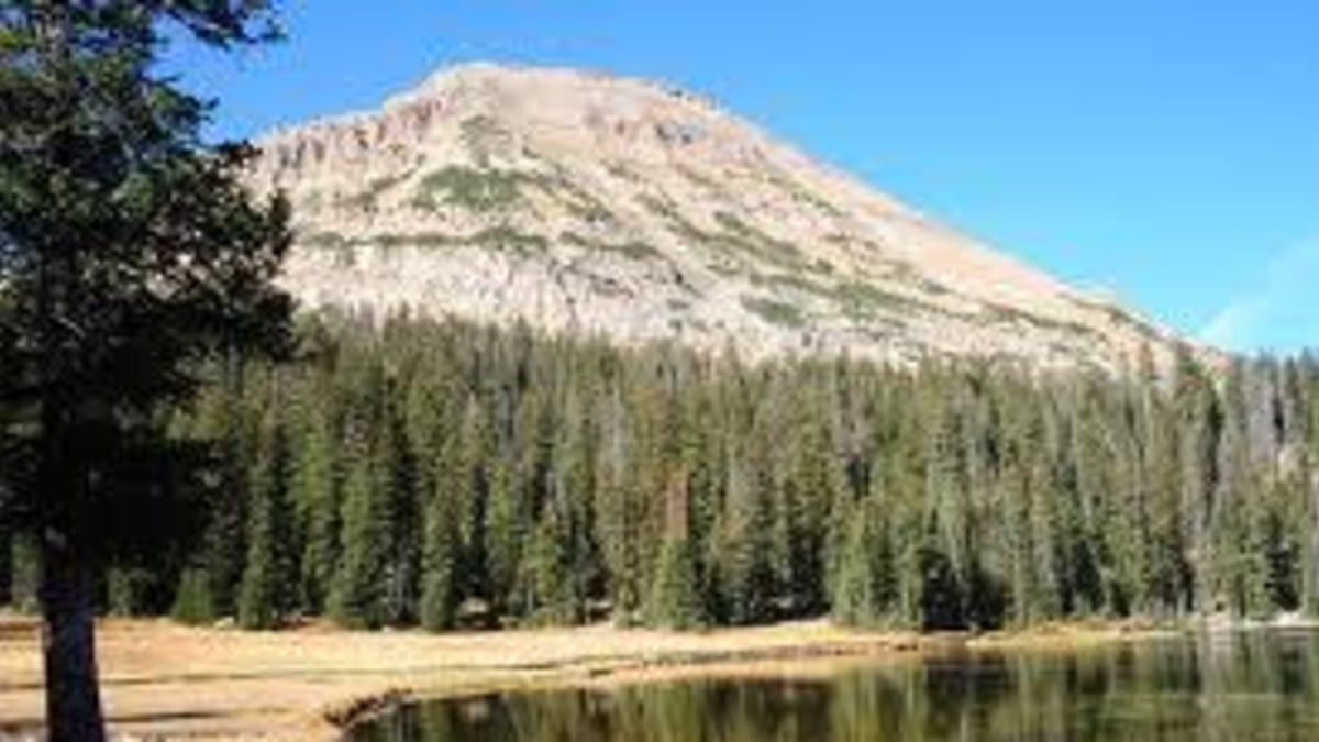 Bald Mountain Campground - Bighorn National Forest