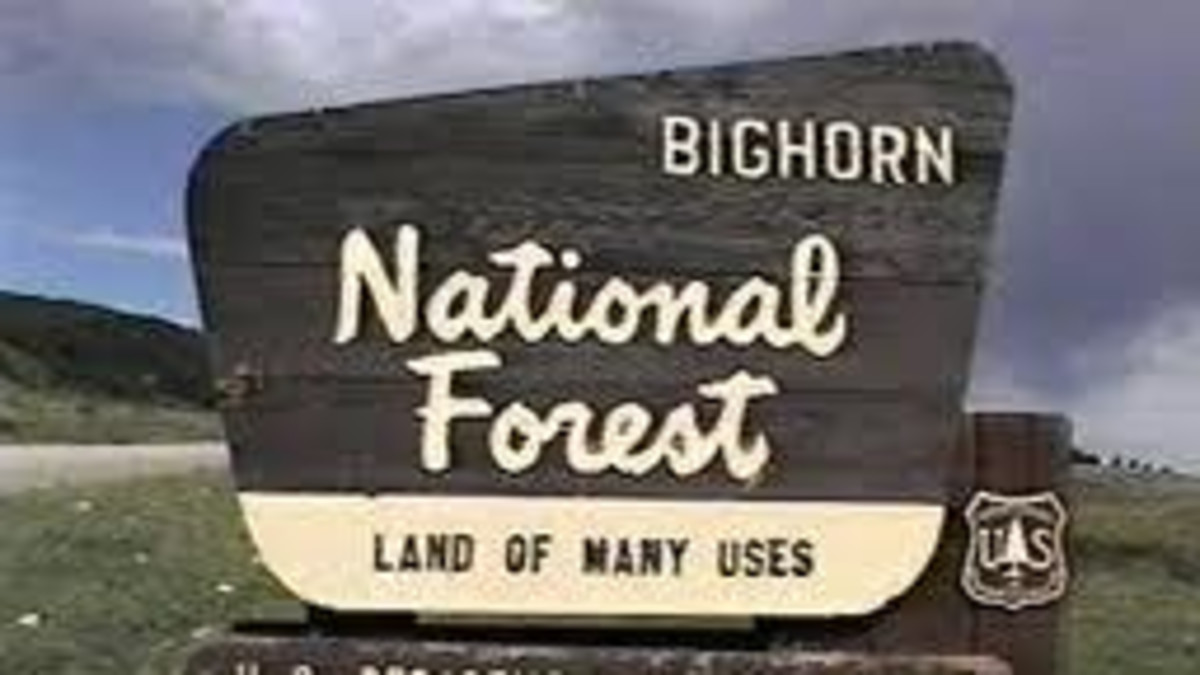 Shell Creek Campground - Bighorn National Forest