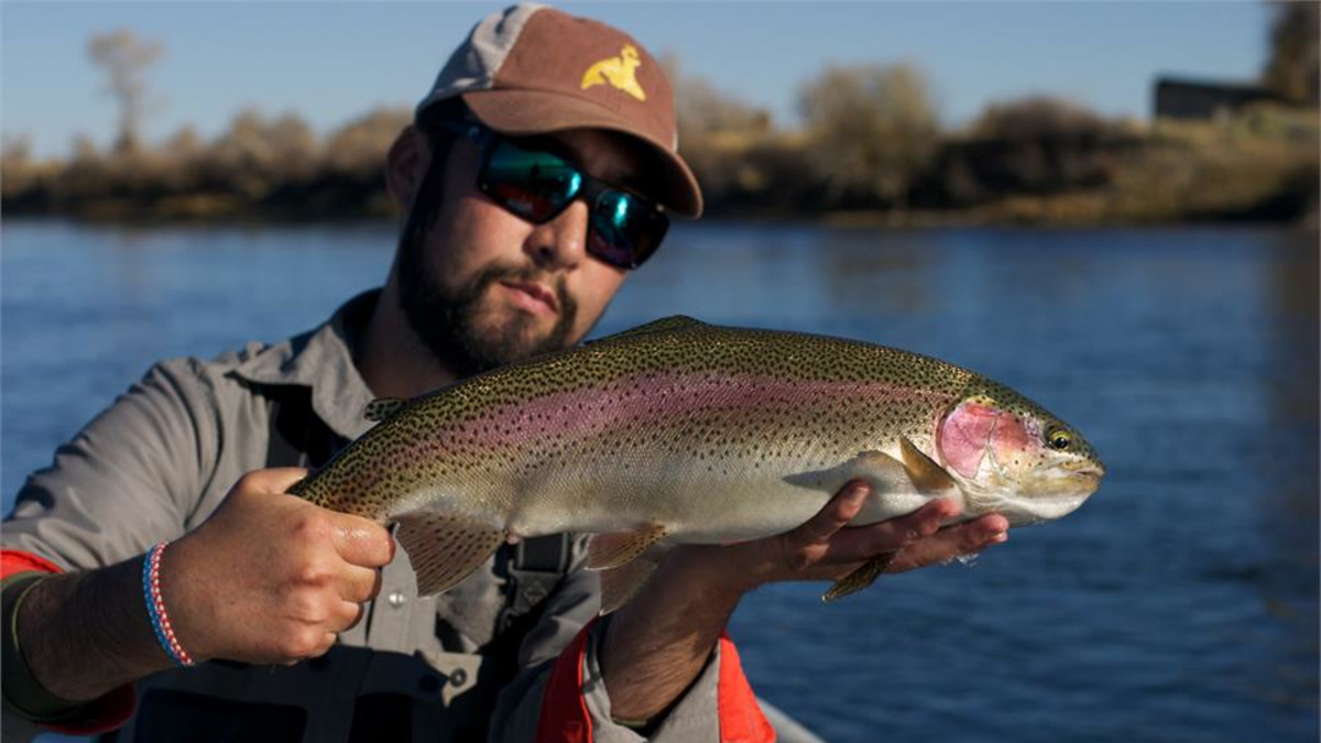 chunky Green River rainbow