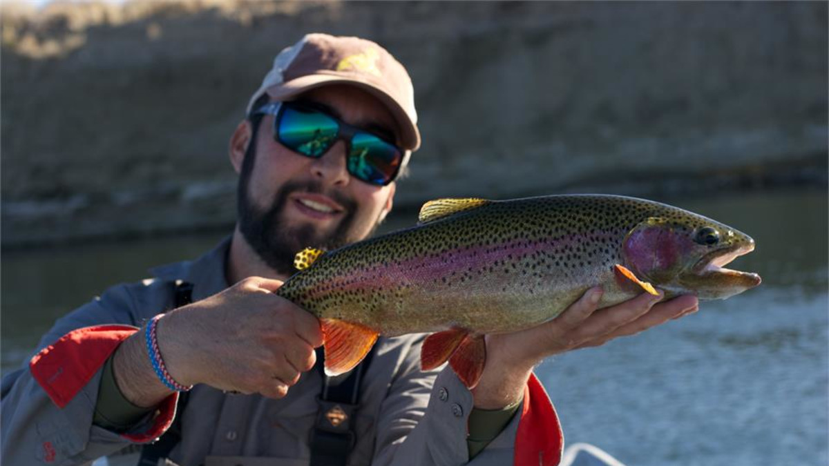 Green River rainbow trout on the fly