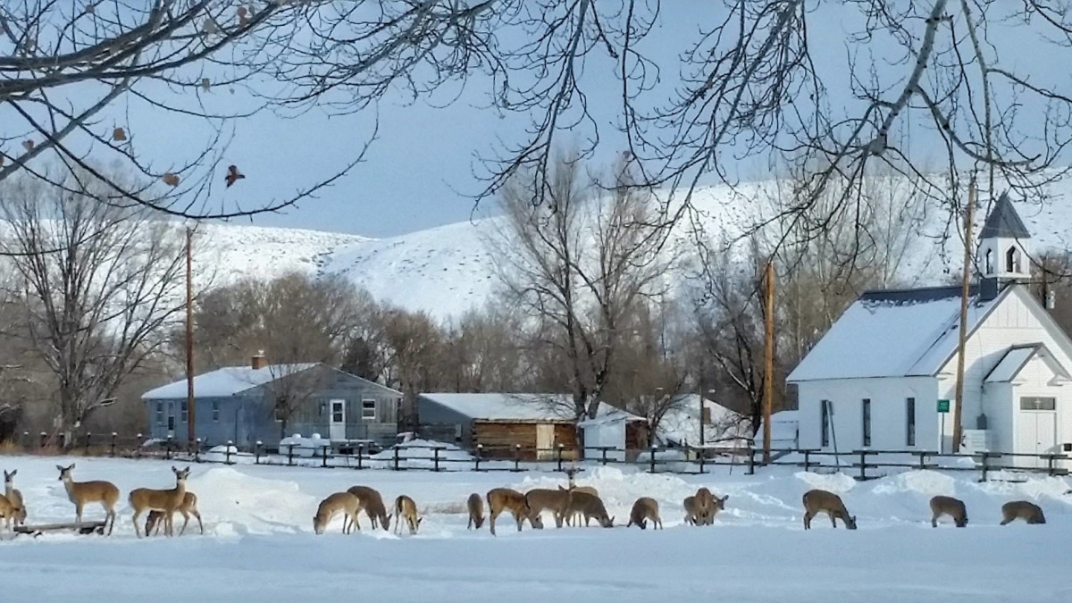Some of our winter residents adjacent to the century-old Hyattville United Methodist Church