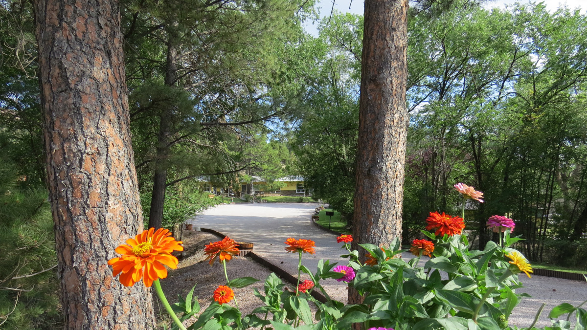Zinnias at the Pines Motel entrance