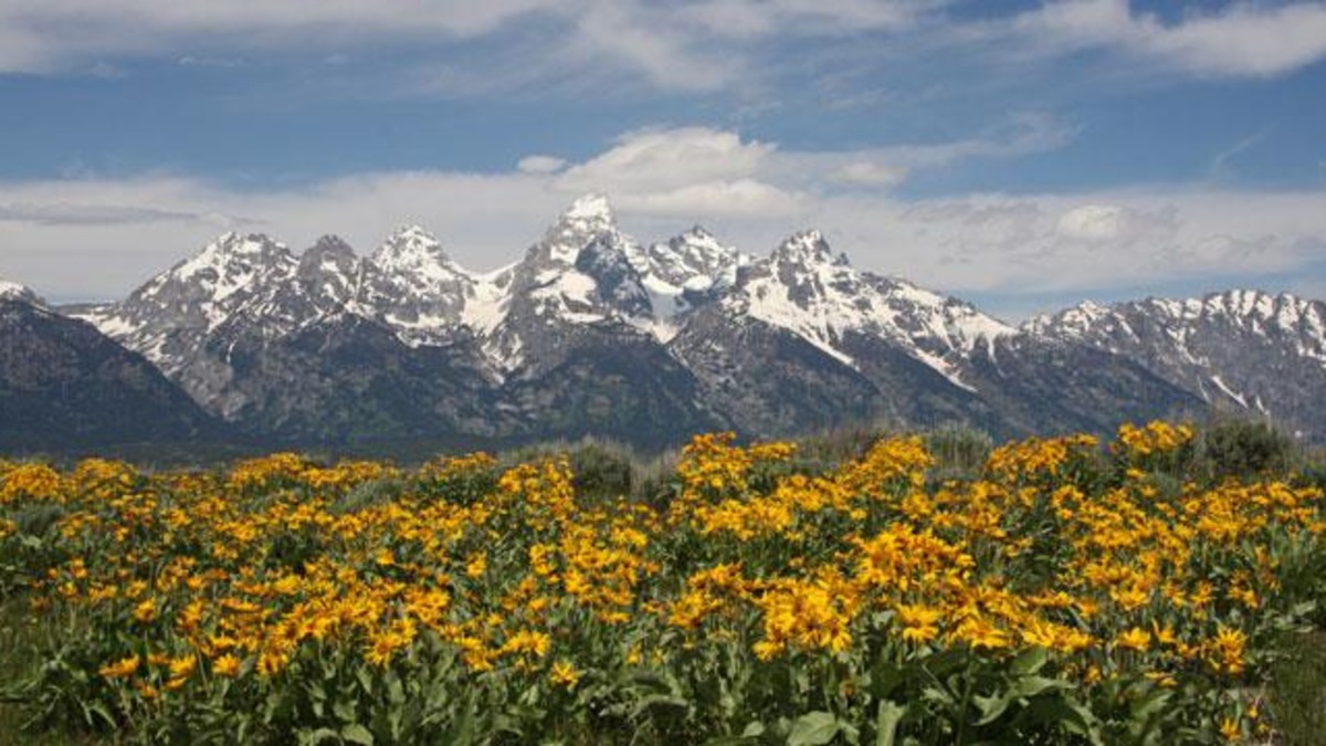 Grand Tetons and wildflowers