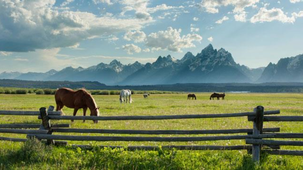 wild horses and Grand Teton National Park