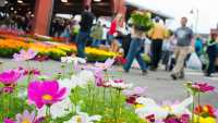 Eastern-Market-Flower-Day.jpg