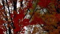 Appledore Fall Color Tour.jpg