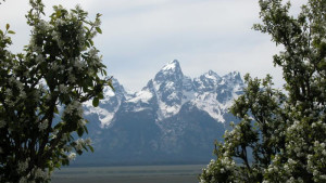 Jackson Hole Bed & Breakfast Association