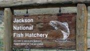 Jackson National Fish Hatchery