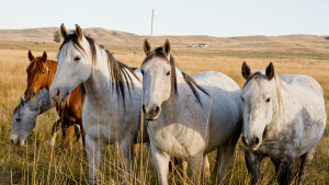 Wind River Wild Horse Sanctuary Photo:  Melissa Hemkin