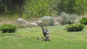 Wildlife passes by on the front lawn.  You will never know what you might see!