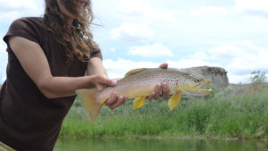 Big Brown ate a Dry Fly