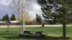 Picnic table in shade on grassy lawn area