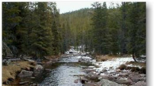 Prune Creek Campground - Bighorn National Forest