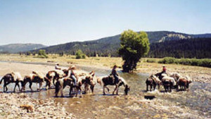 Swift Creek Outfitters/Teton Horseback Adventures