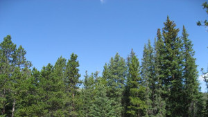 West Tensleep Lake Campground - Bighorn National Forest