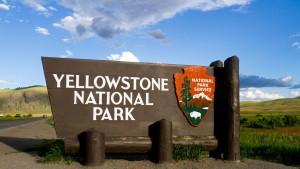 yellowstone-YLLWSTN0816.jpg
