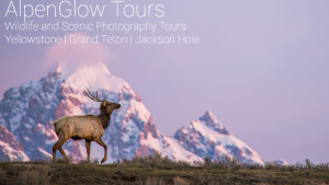 AlpenGlow Tours in Jackson, WY
