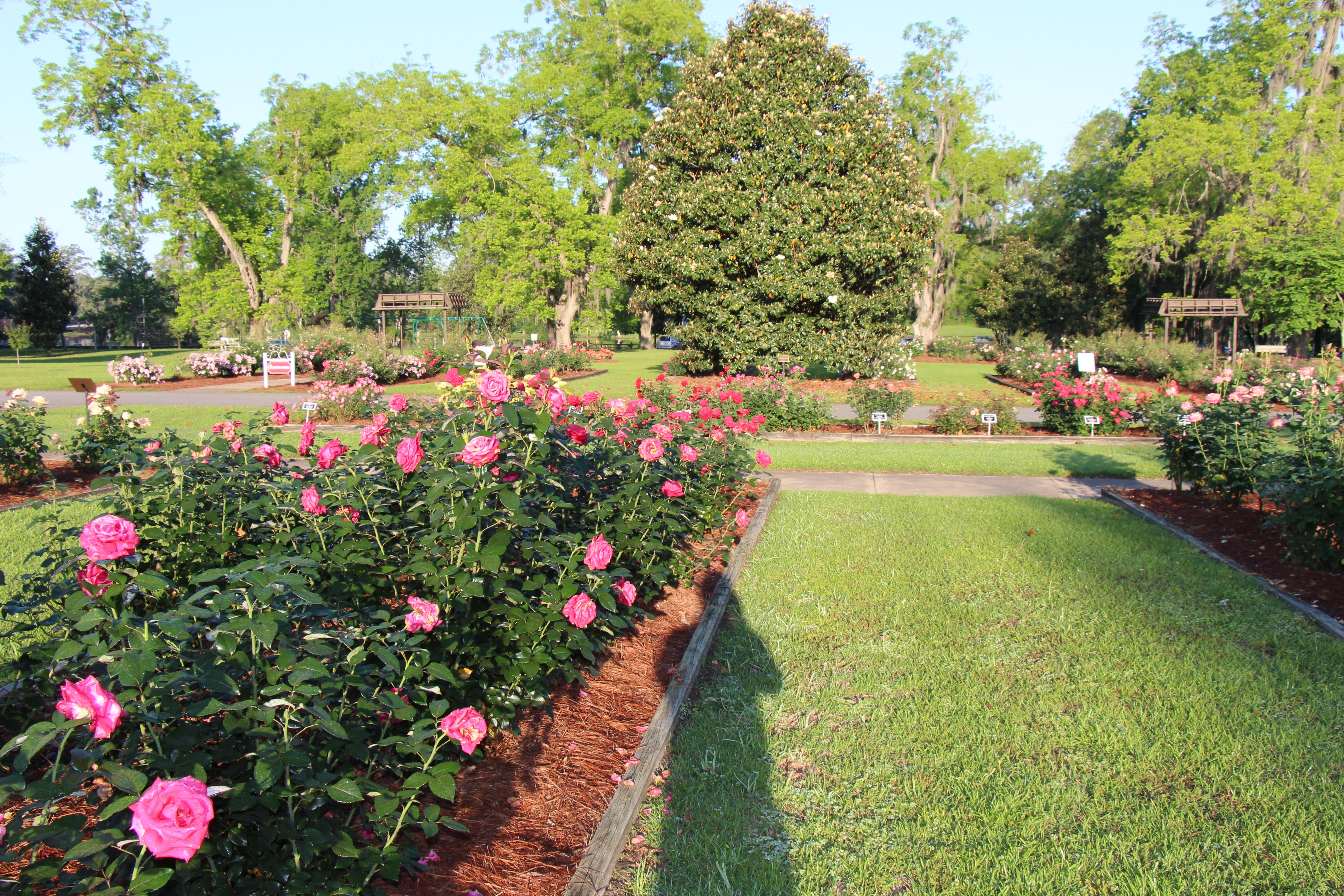Thomasville Rose Garden Official Georgia Tourism Travel Website